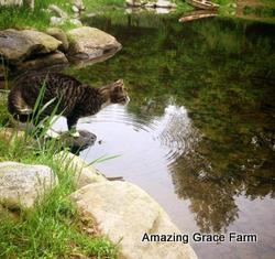Amazing Grace Farm - Cat and pond