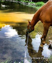 Amazing Grace Farm - Horse and pond