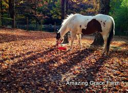Amazing Grace Farm - Horse in the woods